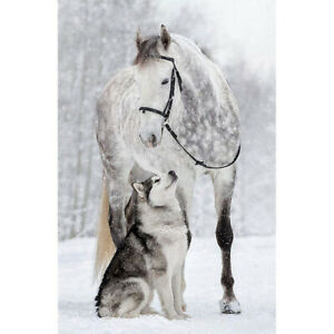 5D-DIY-Full-Drill-Diamond-Painting-Horse-Wolf-Cross-Stitch-Embroidery-Craft-JT1