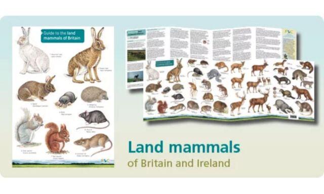 Land Mammals Field Studies Council Guide