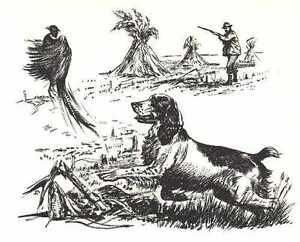 ENGLISH-SPRINGER-SPANIEL-1964-Dog-Art-Print-MATTED