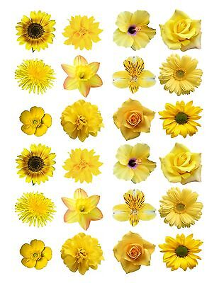 24 icing fairy cake toppers decorations edible Mixed yellow Flowers ND1