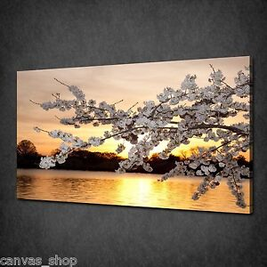 Image Is Loading GOLD SUNSET CHERRY BLOSSOM TREE WALL ART CANVAS