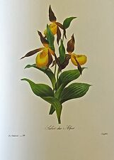Pierre-Joseph Redoute- THE LADY SLIPPER ORCHID  (SABOT DES ALPES) flower