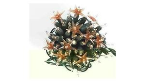 100-Christmas-Tree-Decoration-Clear-Fairy-Lights-Fragrant-Static-Party-4111