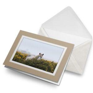 Greetings-Card-Biege-Dartmoor-Pony-Devon-England-3228