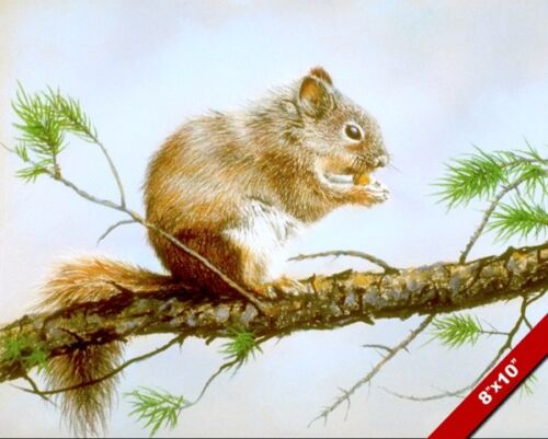 WILD SQUIRREL EATING A NUT IN A PINE TREE ANIMAL PAINTING ART REAL CANVAS PRINT