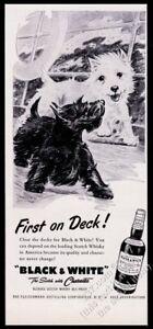 1955 Tricolor Westie Perro Barco Mar Tormenta Arte Black White Scotch Whisky Print Ad Ebay