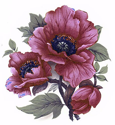 Maroon Pink Poppy Flower Select-A-Size Waterslide Ceramic Decals Bx