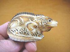 tne-liz-ig-204b) brown IGUANA lizard TAGUA NUT Figurine carving Vegetable carved