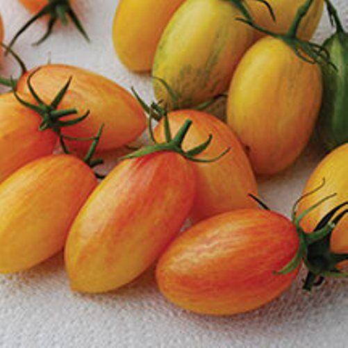 VEGETABLE TOMATO CHERRY ARTISAN BLUSH TIGER 10 FINEST SEEDS