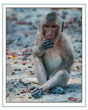 "Original Fine Art Photograph 8x10"" Signed Print Thai Money Eyes Closeup Baby"
