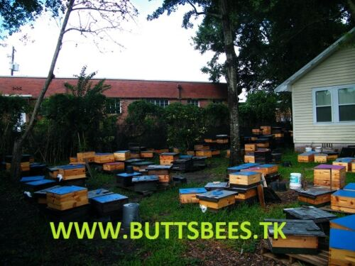 5-FRAME-MED-NUC-MATED-VSHBH-QUEEN-HYGIENIC-HONEY-BEE-NUCS-SOME-DELIVERY