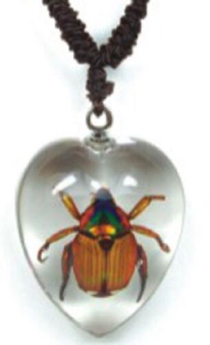 Real Insect Love Heart Valentines Necklace Pendants Beetles and Scorpions