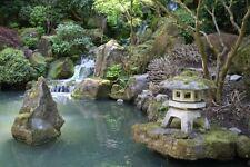Framed Print - Japanese Garden with Koi Carp Pond (Picture Poster Art Fish)