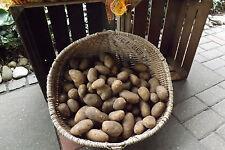 Kartoffeln  von der Stader-Geest 10 kg Sorte Linda