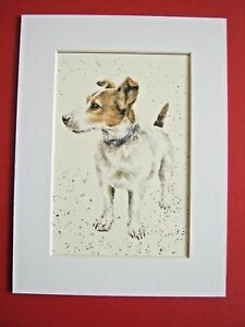 JACK-RUSSELL-TERRIER-DOG-MOUNTED-PRINT-6-x-8-034-WATERCOLOR-PRINT-ART-PICTURE