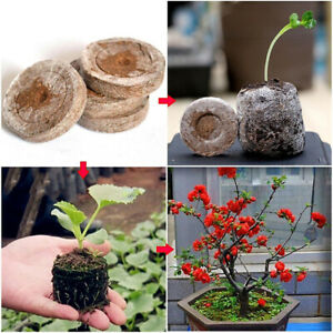 50pcs-25mm-Jiffy-Peat-Pellets-and-Coco-Pellets-Seed-Starting-Plugs-Seeds-Soil-BB