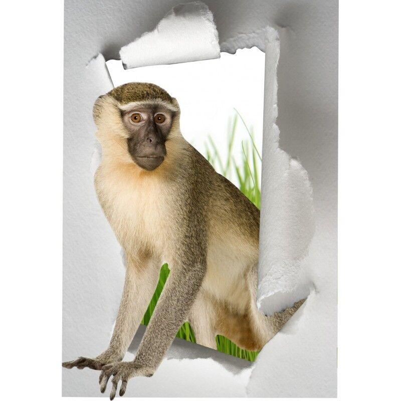 Aufkleber Schein Auge Affe Affe Affe Affe 47cdc2