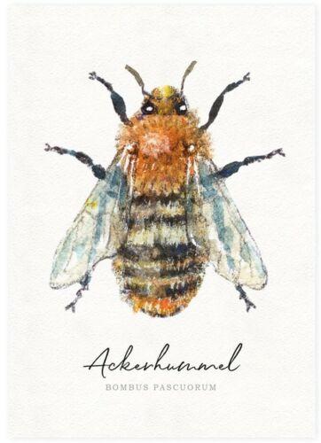 NEU*DANIELA DRESCHER*Postkarte*Wildbienen*Insekt*Biene*11,5 x16,5cm*