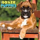 Just Boxer Puppies by Willow Creek Press 9781682340349 Calendar 2016