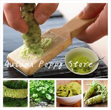 100pcs Wasabi Semillas de r/ábano picante japon/és de semillas Vegetable Seeds Bonsai planta de bricolaje plantas del jard/ín