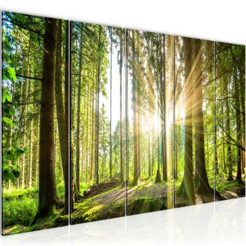 Kunstdruck Leinwand Vlies Bild Bilder Wandbild XXL Wanddeko 200x80 cm Wald