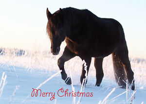 Christmas-Cards-Equestrian-Horse-Pony-Unique-10-Pack-2-Styles-A6-Size-NEW