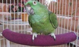 Polly's Cozy Corner Bird Perch, Small, New, Free Shipping