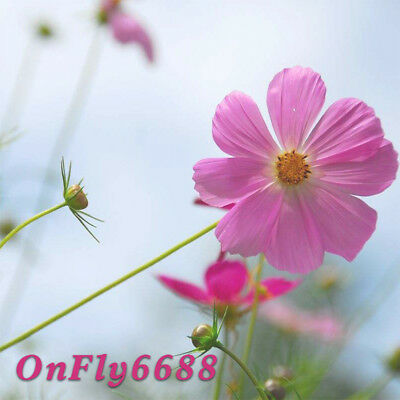 onfly6688