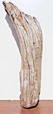 Schwemmholz  Treibholz  Driftwood  1 Skulptur  Terrarium   Garten