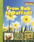 From Bulb to Daffodil by Assistant Professor School of Architecture Ellen Weiss (Paperback / softback, 2007)
