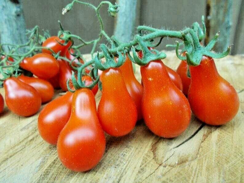 Seeds Cherry Tomato Red Bell NON-GMO Organic Heirloom Ukrainian