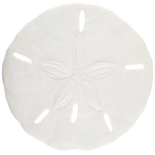 Nautical Sand Dollar Wall Sculpture Beach Ocean Sea coastal Wall Decor