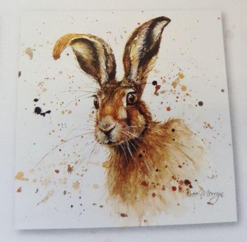 Bree Merryn Canvas Hugh Hare 40cm x 40cm