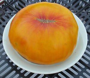 Rare Collection De Graines De Tomate Hawaiian Pineapple Heirloom Seeds-afficher Le Titre D'origine