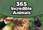 365 Incredible Animals by Laure Maj (Paperback, 2016)