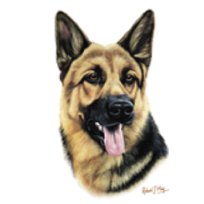 German Shepherd Head Dog On Twelve