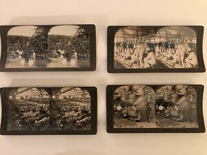 Four-Stereoscope-Cards