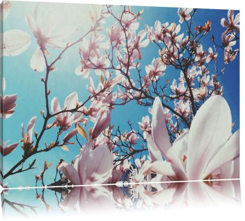 Zarte Rosa Magnolie Blüten  Leinwandbild Wanddeko Kunstdruck