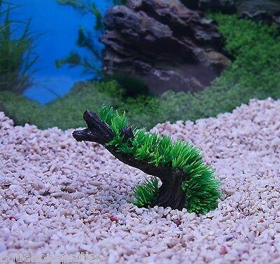 AQUA DECO BIORB NANO AQUARIUM MOSS TREE STUMP SMALL ORNAMENT PLANT DECORATION