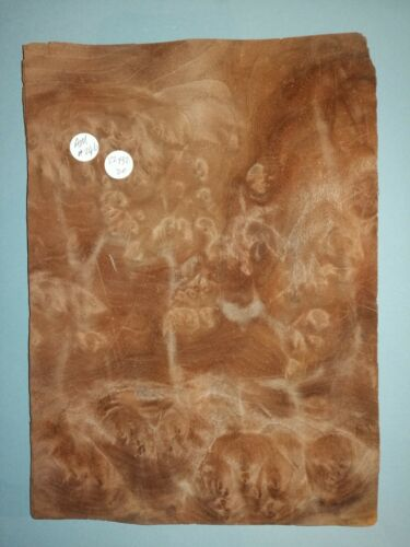 CONSECUTIVE SHEETS OF AMERICAN BURR WALNUT VENEER 22 X 32 cm AM#246 DASHBOARD