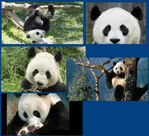 LOVE PANDA BEAR MOM BABY  NATURE CHECKBOOK COVER