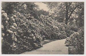 London-postcard-Rhododendron-Dell-Kew-Gardens-P-U-1910-A1163