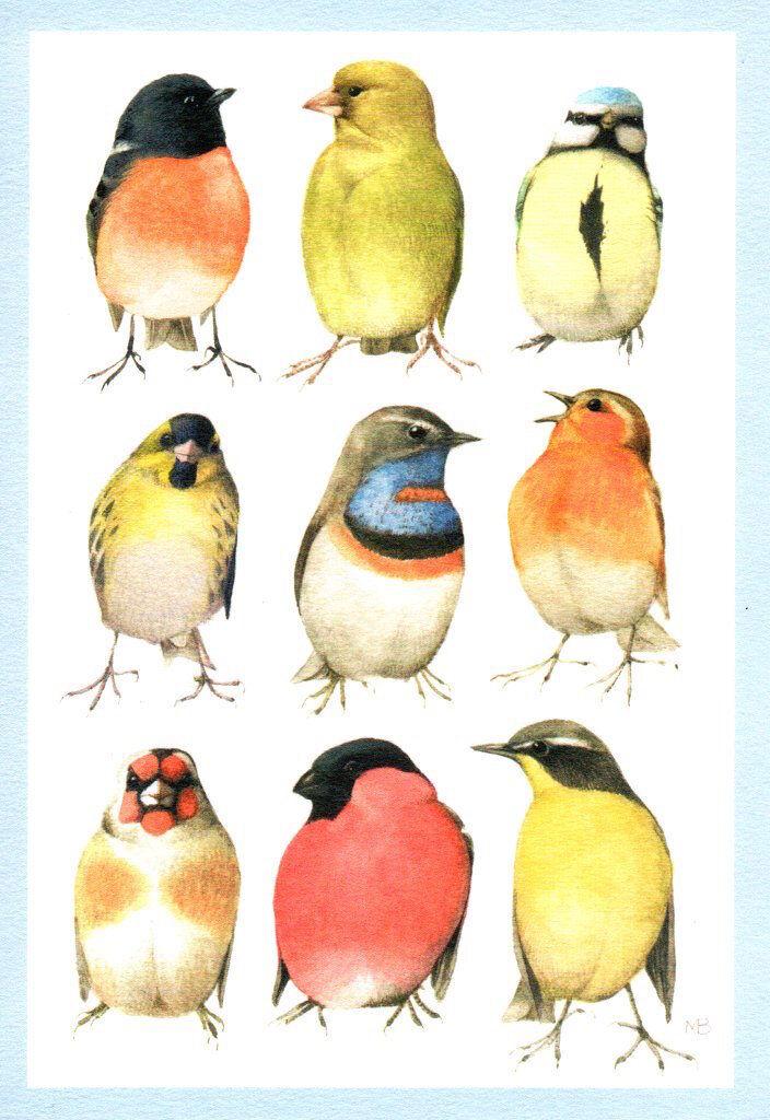 Marjolein Bastin Nature/'s Sketchbook Beautiful Birds Blank Inside Hallmark Card