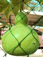 Bottle Tribal Gourd Seeds Calabash Lagenaria Siceraria Organic Vegetable