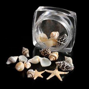 Natural nail art decor mini conch shells starfish sea beach manicure tool diy