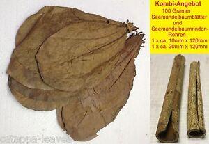 100-Gramm-Seemandelbaumblaetter-2-Rindenroehren-1-2-cm-Catappa-Leaves