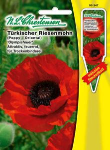 Trk giant poppy olympiafeuer seed papaver orientalflower image is loading turk giant poppy olympiafeuer seed papaver oriental flower mightylinksfo