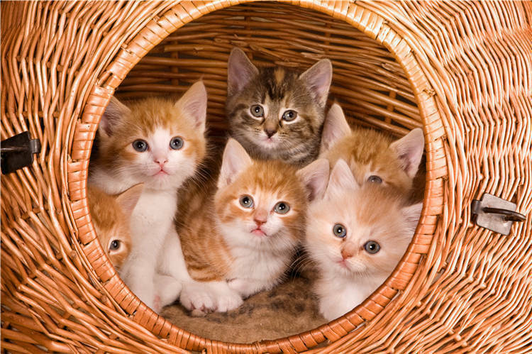Kittens Family in Basket 3D Full Wall Mural Photo Wallpaper Printed Vinyl Decal
