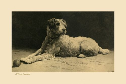 Terrier Dog Herbert Dicksee England REPRODUCTION of a 1928 Engraving FREE SHIP