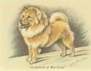 Details about Chow Chow Puppy - MATTED Dog Print - Lucy Dawson